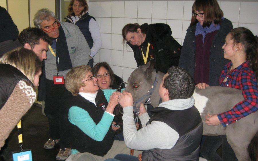 Dr. Christina von Scheven (Bildhintergrund), Tierärztin der Pferdeklinik Burg Müggenhausen und Verantwortliche in der Klinik für die EOphCD 2015, bei der Augenuntersuchung von Pony 'Maja'
