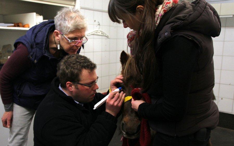 EOphCD Instruktorin Maria Källberg überwacht einen Teilnehmer bei der Messung des Augeninnendrucks