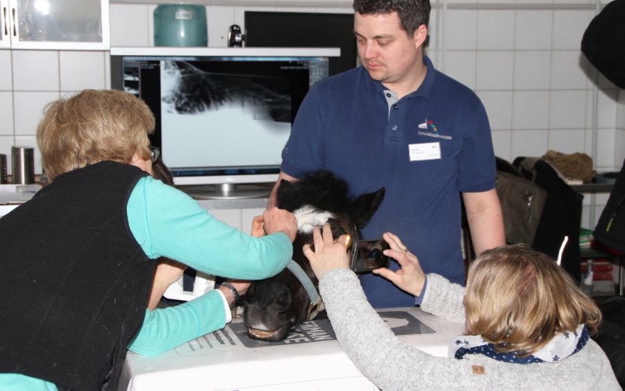 Equine Ophthalmology Case Days (EOphCD)