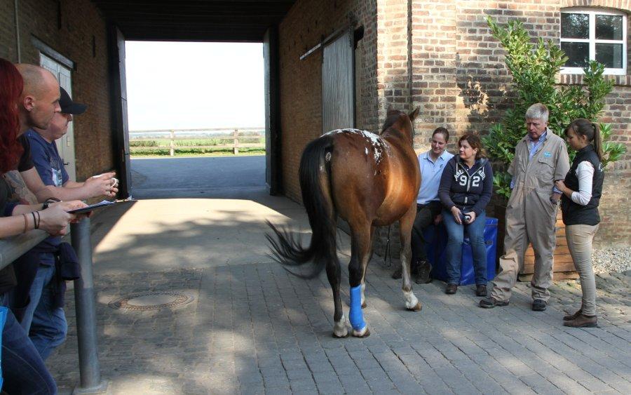 Equine Orthopaedic Case Days 2014