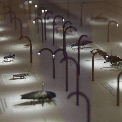 Ausstellung der Fabricius-Sammlung im Zoologischen Museum Kiel; Bildquelle: Claudia Eulitz, Uni Kiel