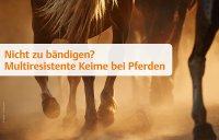 Blitzumfrage: Multiresistente Keime bei Pferden