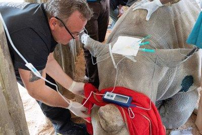 Dr. Frank Göritz im Einsatz für das BioRescue-Projekt zur Rettung des Nördlichen Breitmaulnashorns; Bildquelle: Jan Zwilling / Leibniz-IZW