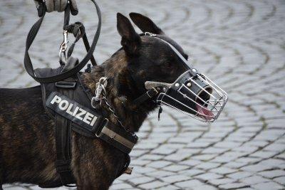 """Onlineportal """"Hunderunden.de"""" verbindet Tierarzt und Tierbesitzer; Bildquelle: Hunderunden.de"""