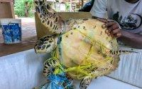 Meeresschildkröte im Netz; Bildquelle: LocalOceanTrust