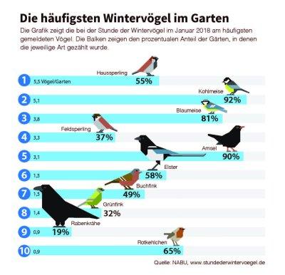 Die häufigsten Wintervögel im Garten; Bildquelle: NABU