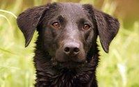 """Senckenberg-Diensthund """"Maple""""; Bildquelle: Lisa Hanke"""