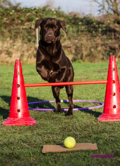 Crossdogging; Bildquelle: Hunderunden.de