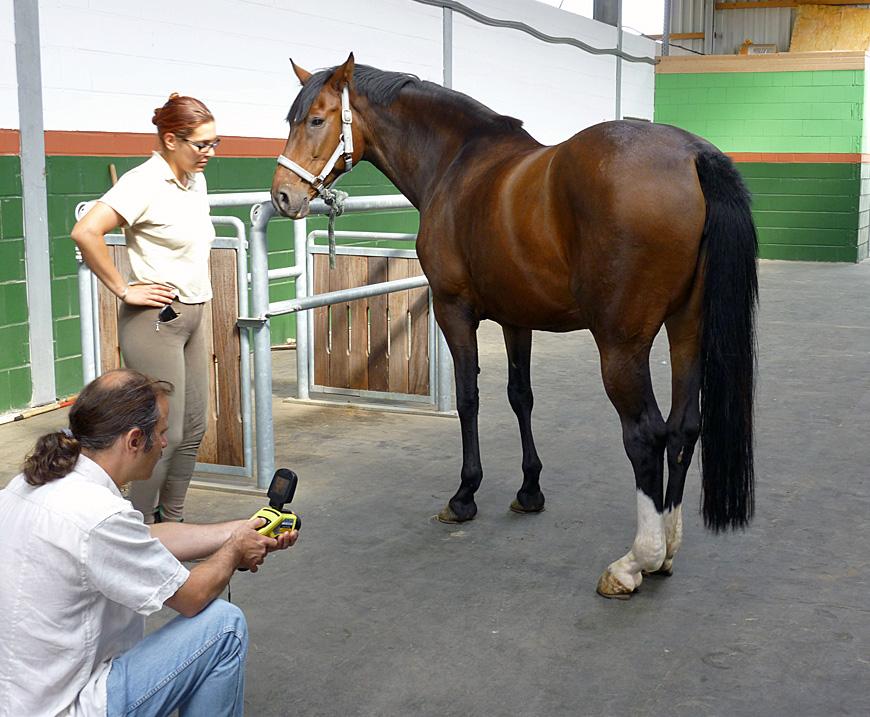 Mobile Tierthermografie bei Pferden
