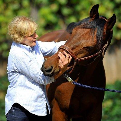 Pferdeosteopathie; Bildquelle: Horst Streitferdt