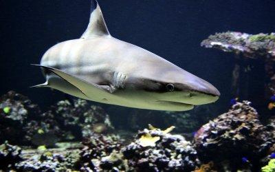 Und der Haifisch, der hat Zähne…; Bildquelle: Leipziger Tierärztekongress