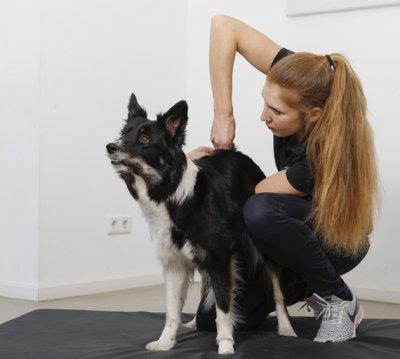 Multimodale Behandlungsansätze entwickeln durch Integrative Tiermedizin