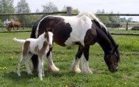 Weide- und Entwurmungsmanagement und  für Pferdehalter