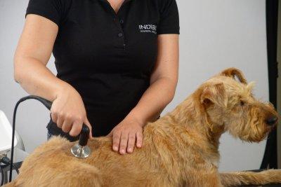 Radiofrequenztherapie in der Veterinärmedizin