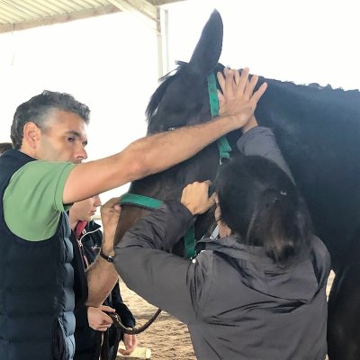 Specializing in the field of Equine Rehabilitation
