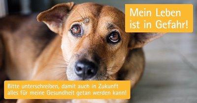 Tierärzteverband startet Unterschriftenkampagne gegen weitreichendes Antibiotikaverbot