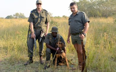 Bayer Animal Health unterstützt die Arbeit dieser Anti-Wilderer Einheit durch die Bereitstellung von Parasitiziden für die Hunde.; Bildquelle: Bayer AG
