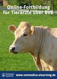 BVDzero Webcongress für Tierärzte jetzt als kostenlose Online-Fortbildung