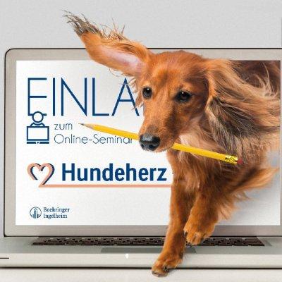 """Kostenlose Online-Fortbildung: """"HUNDEHERZ-was tun!?"""""""