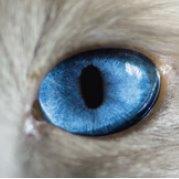 """Aktualisierte """"Leitlinie zur Impfung von Kleintieren"""" der StIKoVet; Bildquelle: MERIAL"""