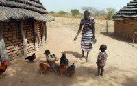 Alleinerziehende Mutter füttert ihre Hühner; Bildquelle: Tierärzte ohne Grenzen