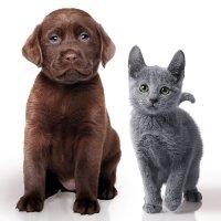 Hunde- und Katzenwelpe; Bildquelle: Merial