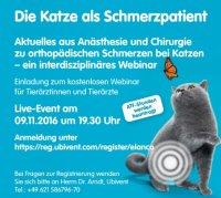 Kostenloses Webinar: Die Katze als Schmerzpatient