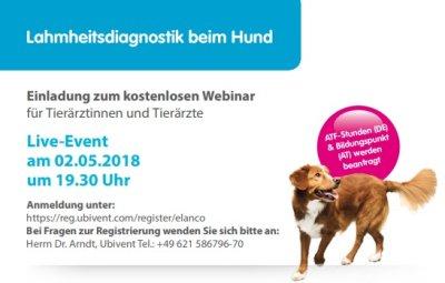 Kostenloses Webinar: Lahmheitsdiagnostik beim Hund
