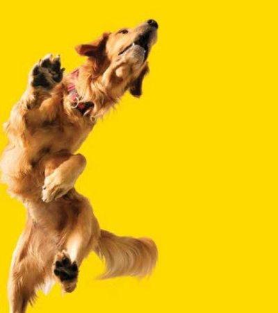 Aus dem Leben eines Sporthundes � Lahmheiten von akut bis chronisch