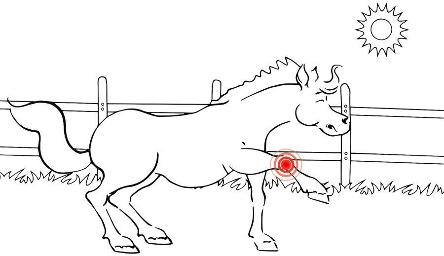 Animationsfilme zum Thema unkomplizierte Lahmheit bei Hund und Pferd