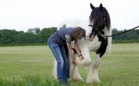 Degenerative Gelenkerkrankung beim Pferd: den Knorpel unterstützen und weiteren Abbau vermeiden; Bildquelle: Heel Vet