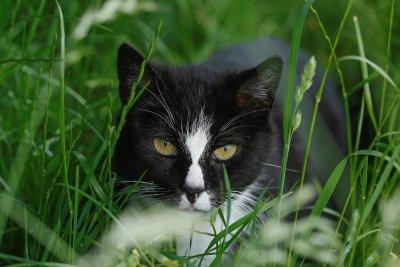 Behandlung der chronischen Niereninsuffizienz der Katze; Bildquelle: Heel