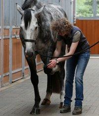 Pferd; Bildquelle: Heel Vet
