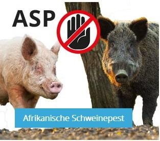 Informationen, Ausbruchszahlen und Verbreitungsgebiete der ASP