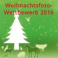 Weihnachtsfoto-Wettbewerb der IDT Biologika