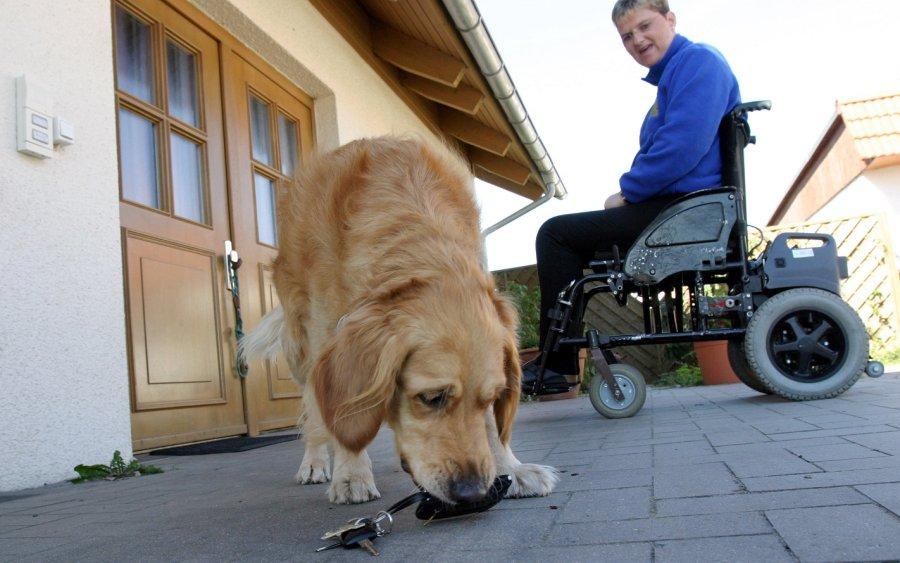 Der Schlüssel zu einem selbstbestimmten Leben: Behinderten-Begleithunde haben wichtige Aufgaben � beispielsweise für ihren Halter den Haustürschlüssel zu apportieren, wenn er herunterfällt.