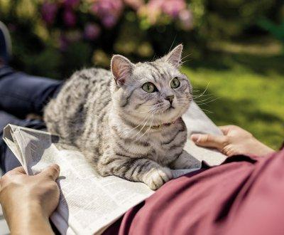 Der neue kombinierte Parasitenschutz für Katzen; Bildquelle: MSD
