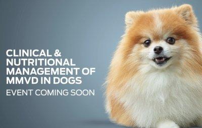 Kostenloses Webinar: Klinische und diätetische Behandlung von Herzkrankheiten bei Hunden