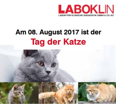 Laboklin Aktion zum Tag der Katze