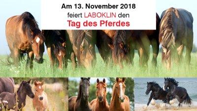"""Laboklin """"Tag des Pferdes"""""""