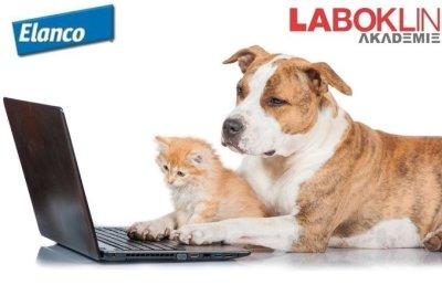 Web-Seminar: Reisekrankheiten bei Hund und Katze � erkennen, therapieren und vor Allem vorbeugen