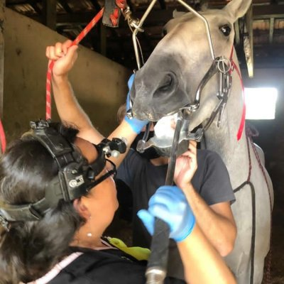 The Influence of Dentistry in Equine Performance; Bildquelle: Carla Michel Omura