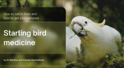 Free WSAVA Course: Starting Bird Medicine